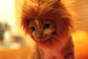 Lucy-as-lion1