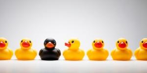 ducks1